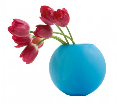 Red tulip in blue vase