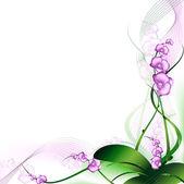 Fotografie orchidej