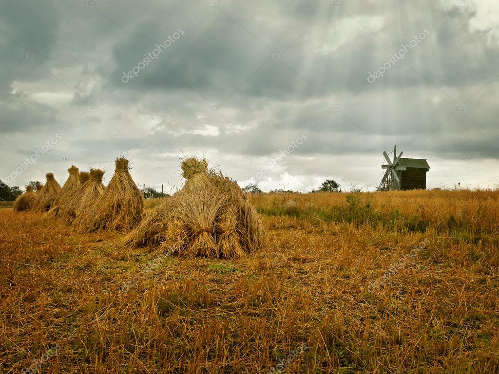 Field in the village