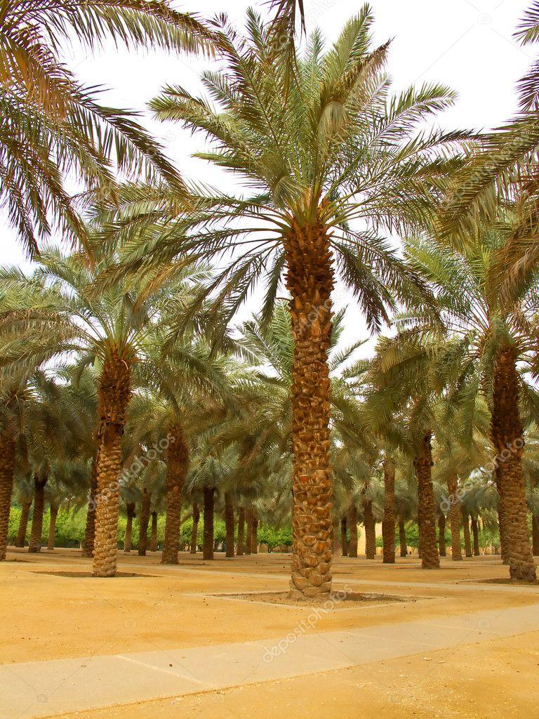 Palm garden — Stock Photo © swisshippo #3109421