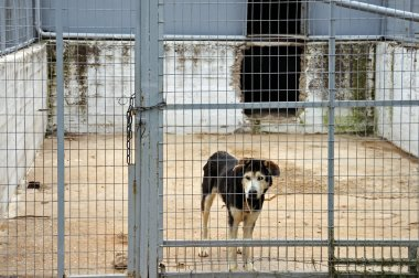 Caged dog
