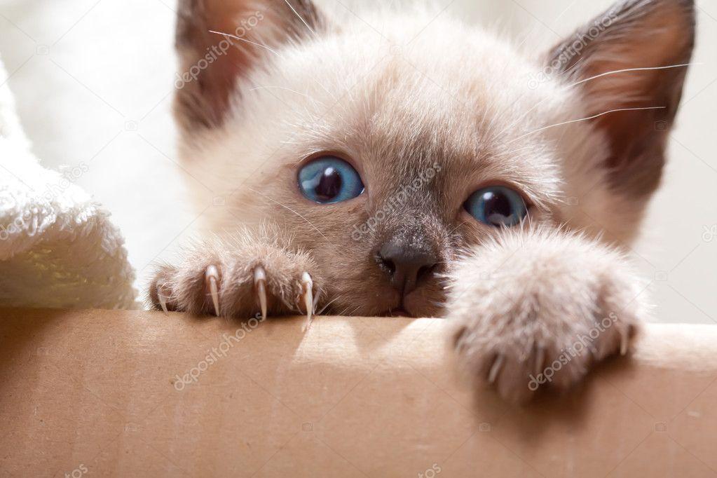 Jonge Pussycat