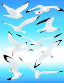 Sea gull sada