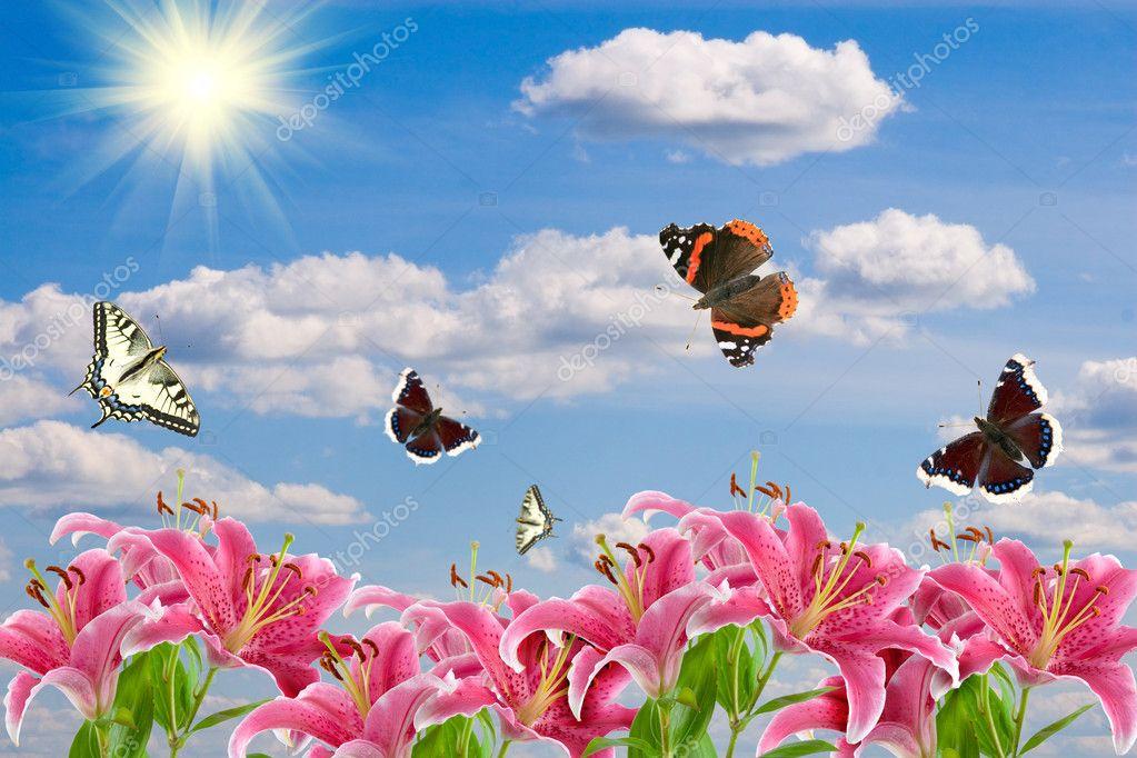 Pink lilies and a butterflies