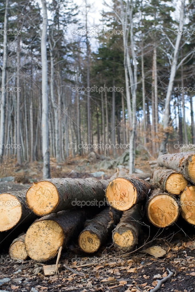 Deforestation area in forest