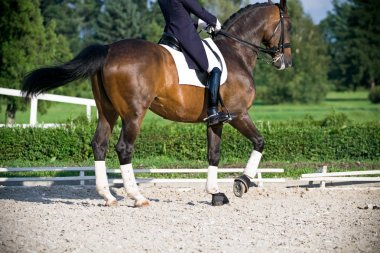 Horse dressage outdoors in nature