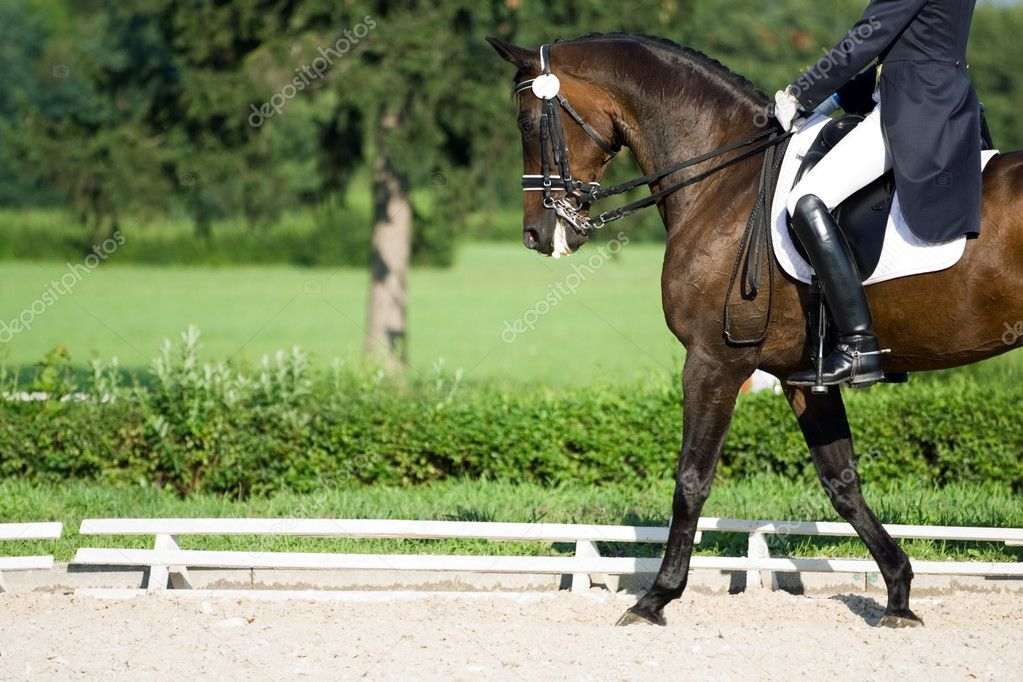 Horse dressage in summer