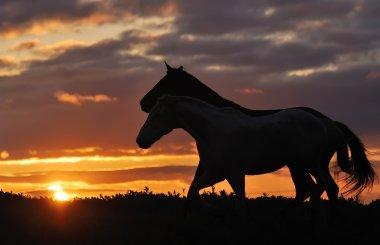 Herd of horses on sunset