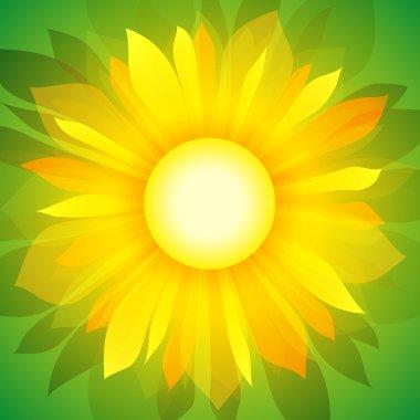 Sunflower on green (vector background)