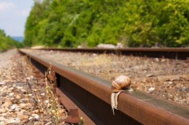 A snails