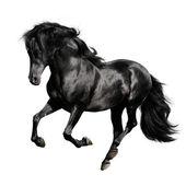 Cavallo nero su sfondo bianco