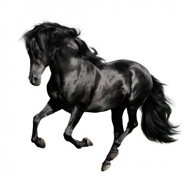 Black horse pura raza espanola runs gallop isolated on white background stock vector