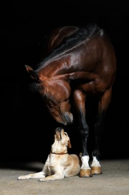 Horse and dog on the black