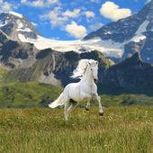 Fotografie bílý kůň běží tryskem v údolí