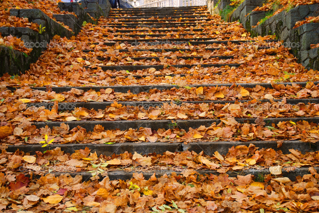 Outdoor stairway with yellow fallen leaves
