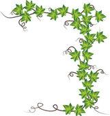 Fotografia edera verde. illustrazione vettoriale