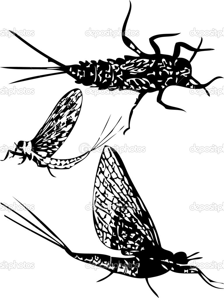 Silhouettes of mayfly insect