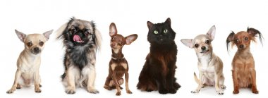 Group of small dogs and a cat