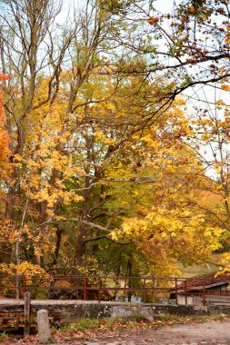 View of beautiful golden autumn park stock vector