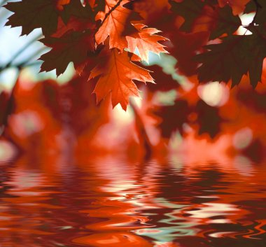 Red autumn leaves reflecting in the water