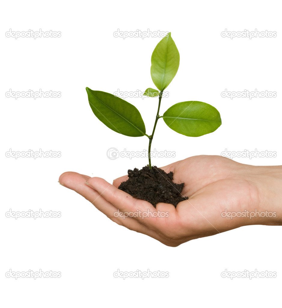 Tree seedling in hand as a symbol of nature protection stock tree seedling in hand as a symbol of nature protection stock photo biocorpaavc