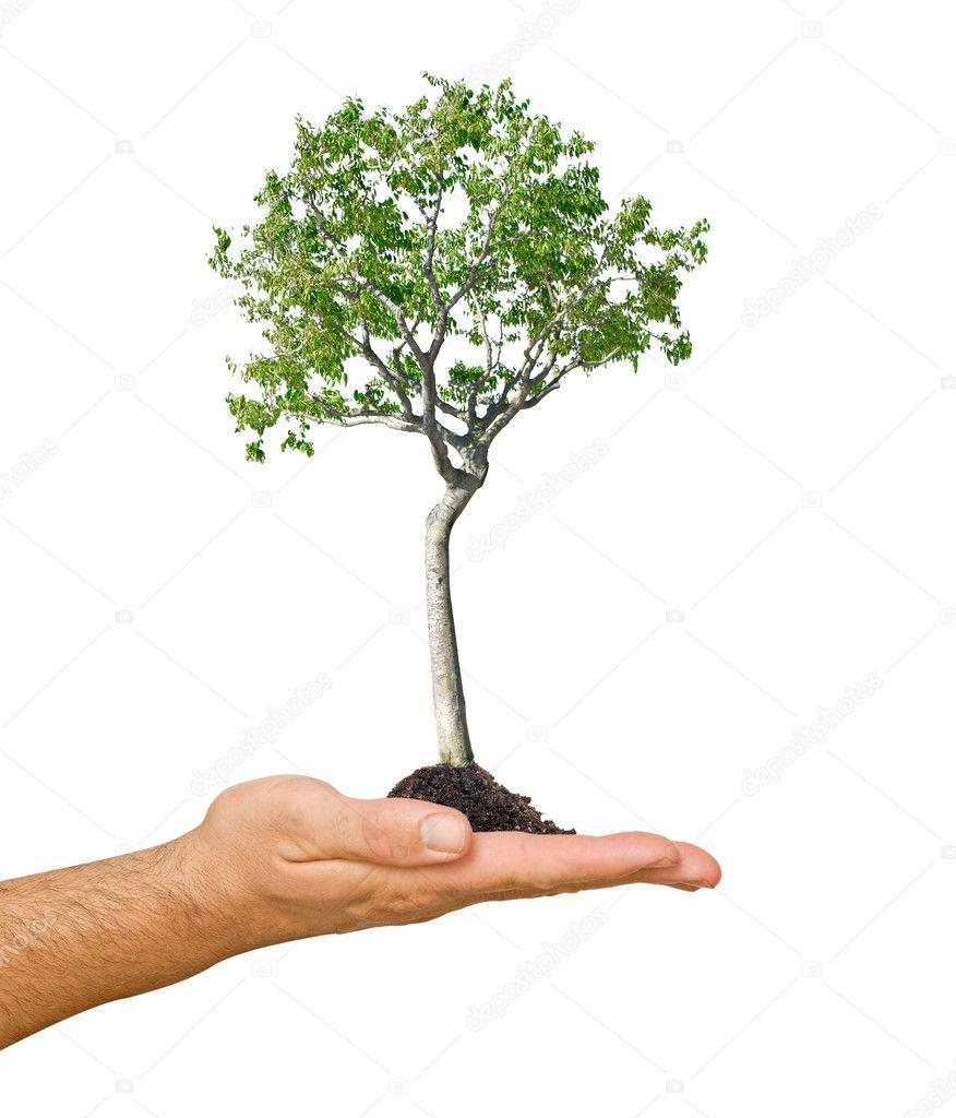 björk träd