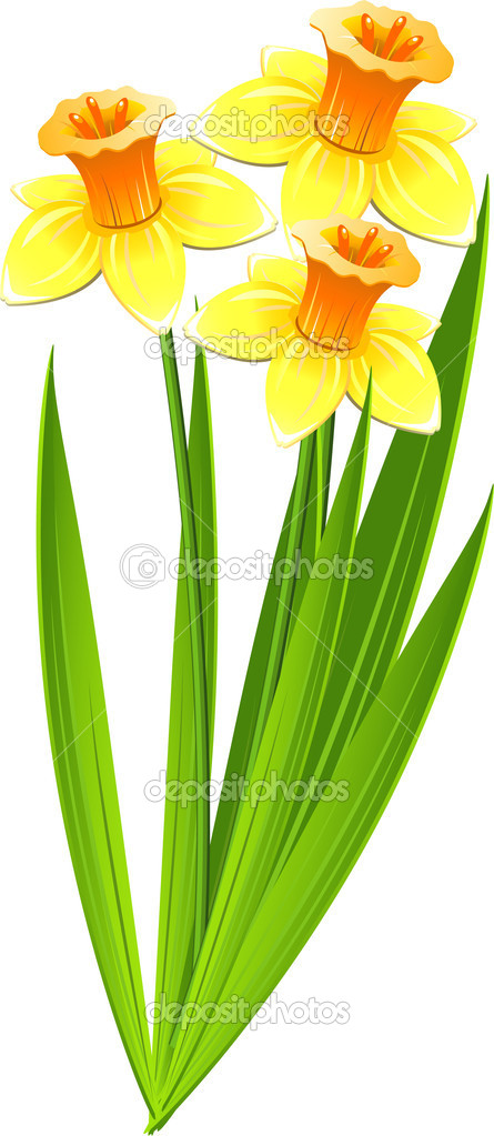 Bouquet of daffodils