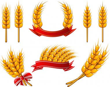 Collection of design elements. Wheat