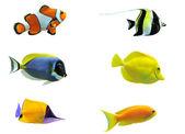 Fényképek trópusi hal