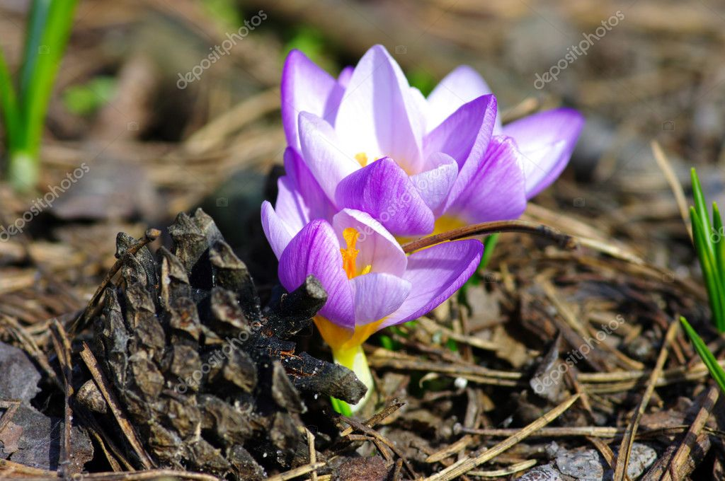 Beautiful Spring Flowers in the wood