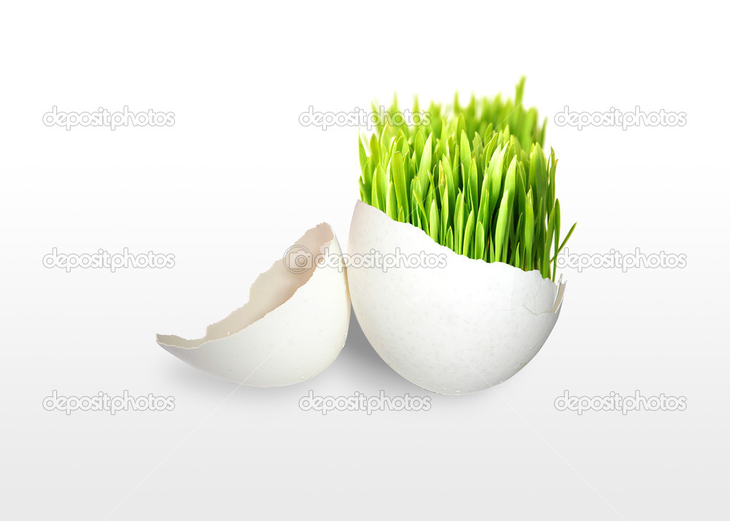 Green grass in egg