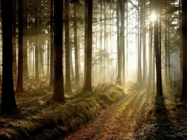 Path leading through the coniferous forest in the direction of the setting sun. Photo taken in November. stock vector