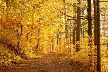 Fall lane at sunset