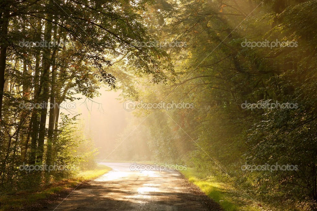 Фотообои Country road in autumn forest