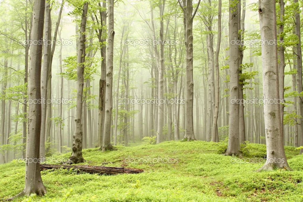 lo rewilding trees forests - HD1200×797