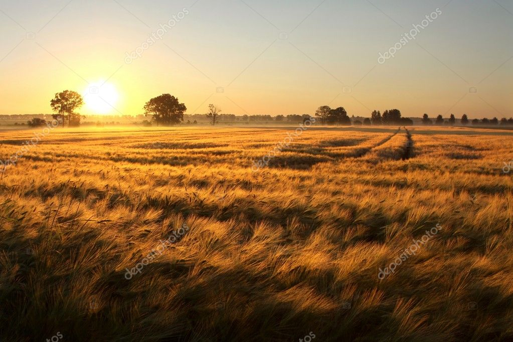 Sunrise over the fields