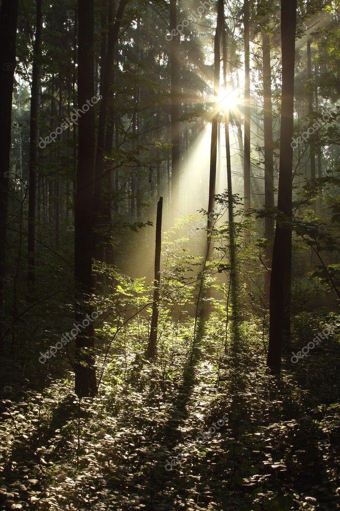 Фотообои Таинственный лес