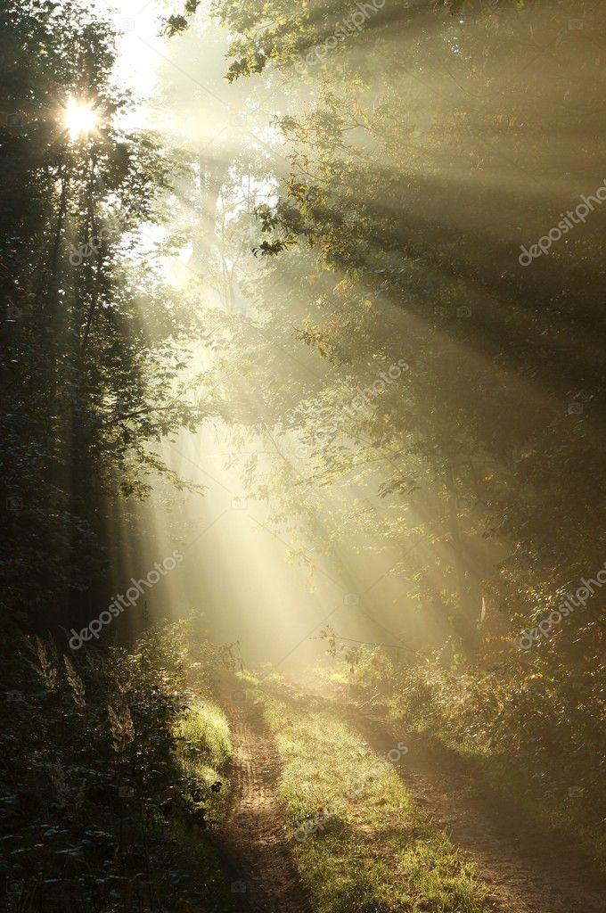 Фотообои Первое осеннее утро в туманном лесу