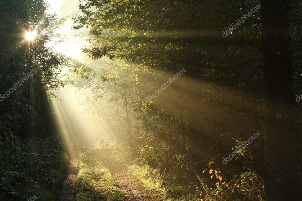 Фотообои Sunlight falling into autumn forest road