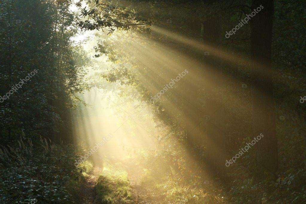 Фотообои Солнечные лучи, падающие на тропинке в осеннем лесу