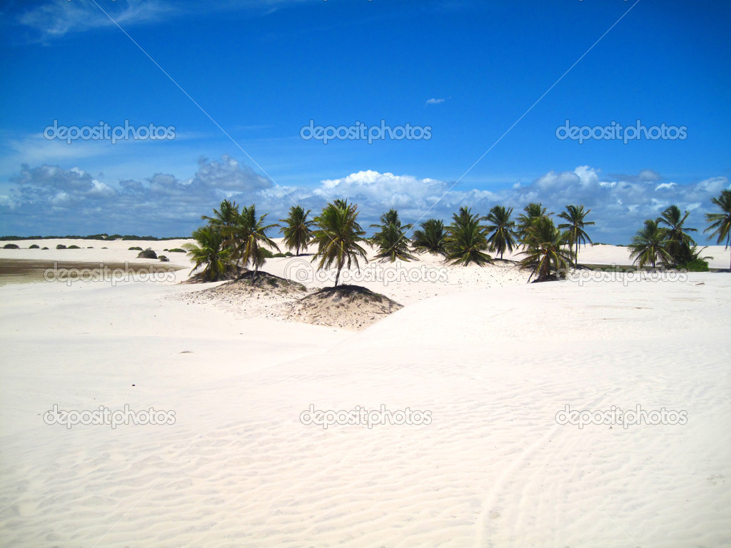Beautiful scene of a tropical beach