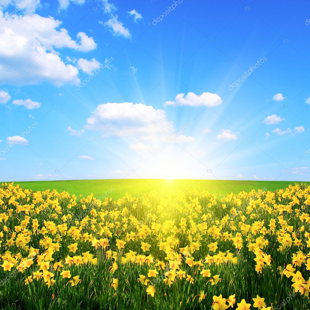 Flower field,blue sky and sun