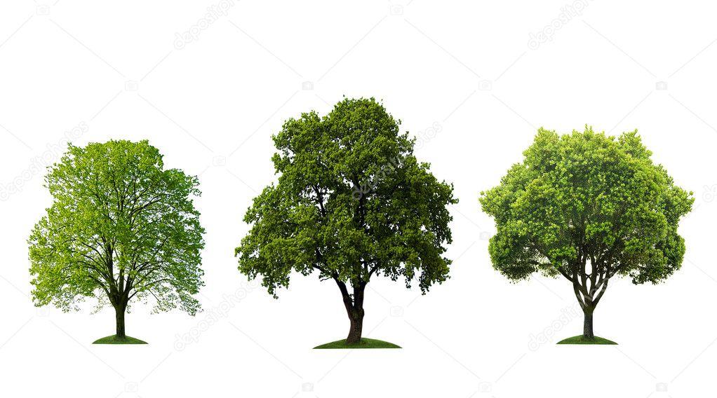 Three beautiful tree isolated