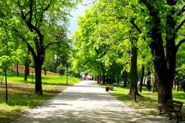 Peaceful park in spring
