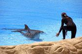 nő és a delfin