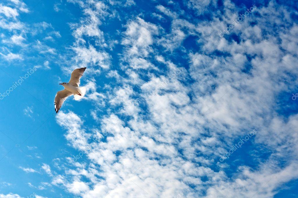Seagull on a blue sky