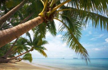 Coconut paradise