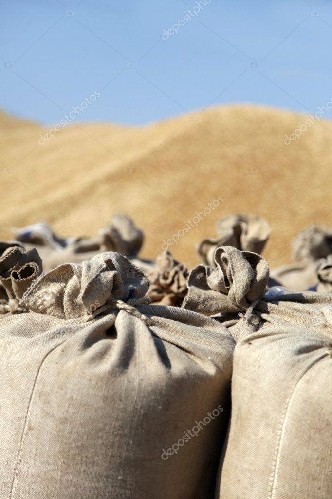 Sack with wheat at outside