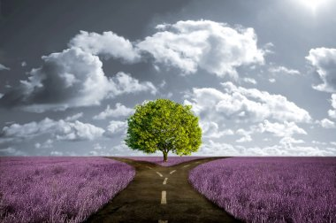 Crossroad in lavender meadow and with tree alone stock vector