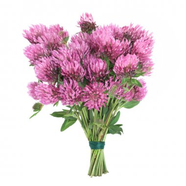 Clover Herb Flowers